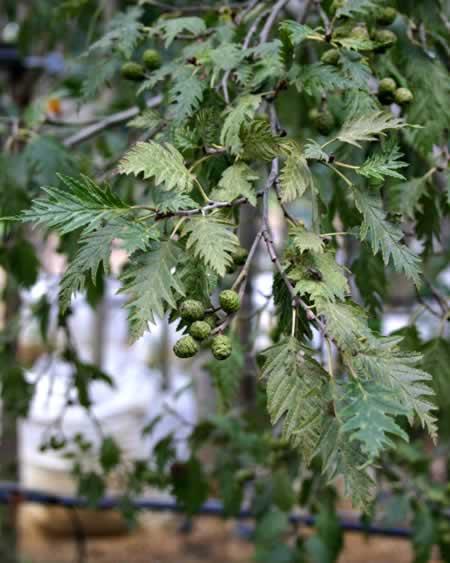 Вьющиеся растения для просмотров 42