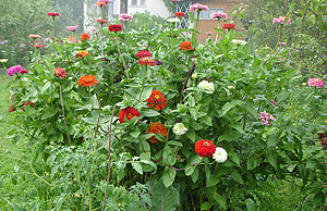 Семена чтобы выросли махровые цветки