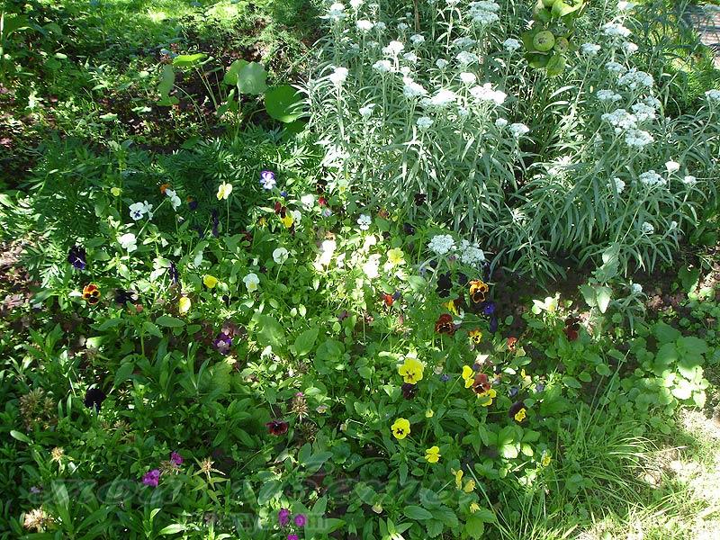Из атласных цветов белые цветы фото