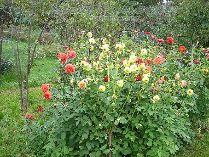 Посадка и выращивание цветов 51