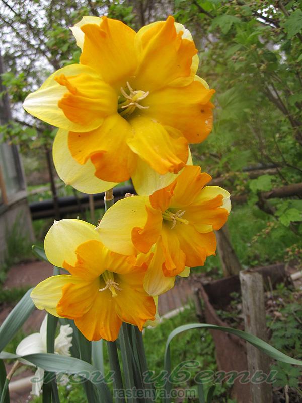 Какие цветы посадить на кладбище, чтобы они цвели